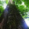 Kakamega Forest National Reserve
