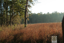 Kanha National Park Landscape