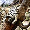 Karlapat Wildlife Sanctuary Orissa