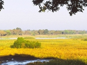 Kasanka National Park