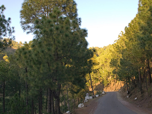 Kasauli Holiday Package Photos
