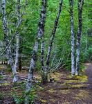 Indian Henry's Hunting Ground via Kautz Creek