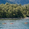 Kayaks Exploring Fiordland - South Island NZ