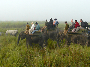 Assam Wildlife Tours 4 Days Photos