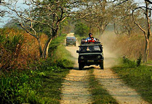 Kaziranga National Park Safaris