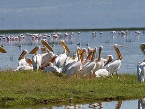 1 Day Lake Nakuru National Park Safari
