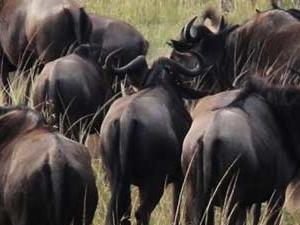 7 Days Kenya Horizon Safari