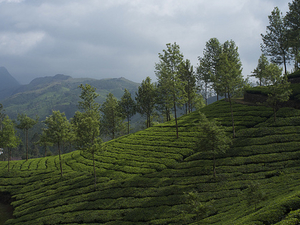Eco-Travel Across Kerala Photos