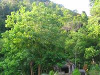 Khao Kriap Cave