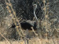 Khaudom National Park