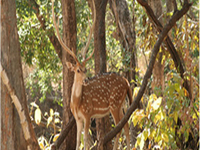 Kheoni Wildlife Sanctuary