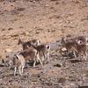 Kibber Wildlife Sanctuary