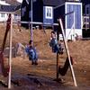 Kids Playing In Qaanaaq