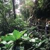 Kinabalu Park - Watching