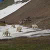 Kintla Lake Head Trail - Glacier - Montana - USA