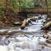 Kitchen Creek - Ricketts Glen State Park PA