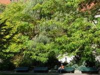 Köllnischer Park
