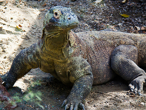 Komodo Adventure 3Day / 2Night Tour Photos