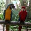Kuranda Birdworld