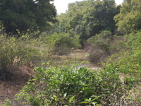 Kabore Tambi National Park