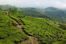Kerala Big