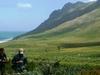 Fynbos In The Kogelberg Mountain