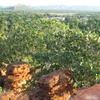 Kununurra From Mirima National Park