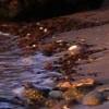 La Brena Y Marismas De Barbate Nature Reserve