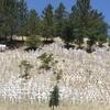 Lafayette Hillside Memorial Panoramic