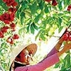 Lai Thieu Orchard - Cau Ngang Tourist Area