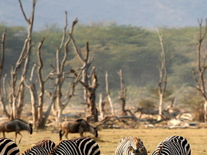 Overnight Safaris in the Manyara/ Serengeti/Ngorongoro Photos