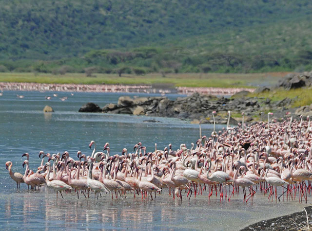 Kenya Bird Watching Safaris Photos