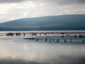 Explore Lakes In Kenya Photos