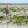 @ Lake Opeta In Uganda