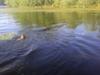 Lake Oscawana