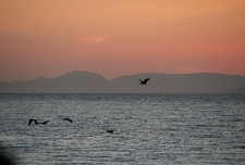 Lake Victoria In Tanzania