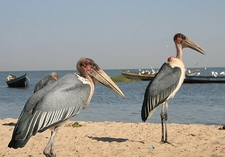 @ Lake Victoria TZ
