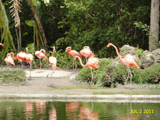 Lakeview In Zoo