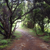 Lake Waikareiti Walk - Te Urewera National Park - New Zealand