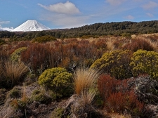 Landscape @ Tongariro National Park NZ