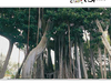 La Orotava Acclimatisation Gardens