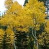 Late Fall Boulder