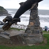 Leaping Dolphin Aberporth