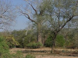 Lengwe National Park