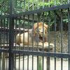 León, Zoológico Simón Bolívar