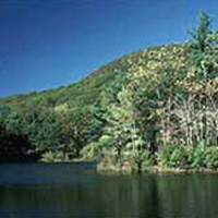 Leominster State Forest