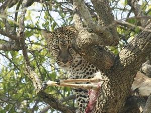 Masai Mara Safari Fotos