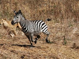 Luxury Safari - Tanzania (5N/ 6 D )