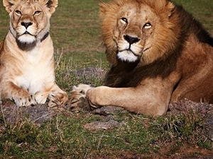 Arusha, Ngorongoro and Manyara 4 Days Packages Photos