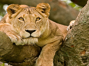 Queen Elizabeth and Lake Mburo Wildlife Safari Photos